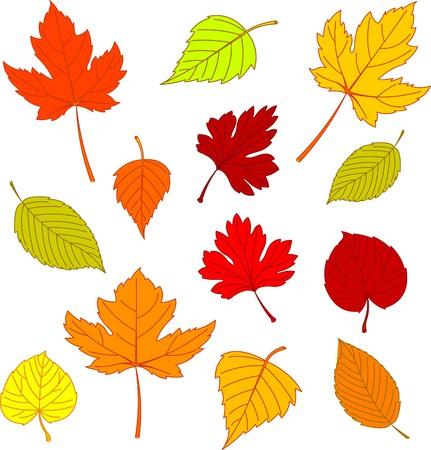 Ilustración de diferentes hojas de otoñales aislados en blanco  Foto de archivo - 7879527