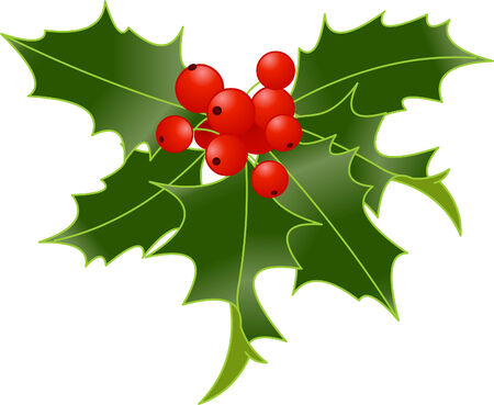 berry: Holly berry isolated on white background Illustration