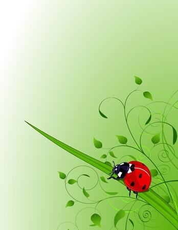 Fondo verde con plantas y Mariquita Foto de archivo - 8834325