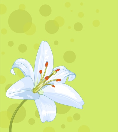 Beautiful lily seamless card Vector