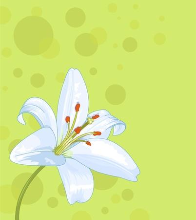Beautiful lily seamless card Çizim