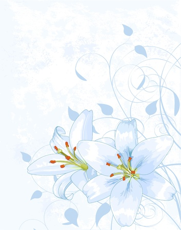 day lily: Lilly on light blue background with place for your text