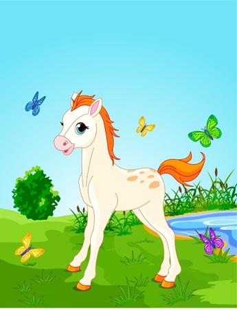 晴れた日に牧草地に馬子馬。背景は、別のパスと、移動または削除されたことができます。