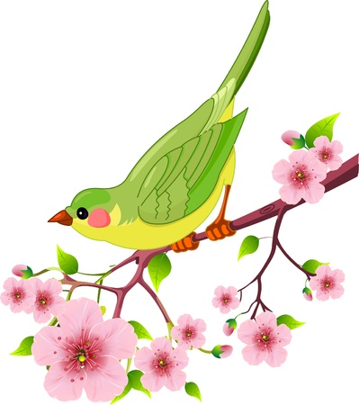 Cute bird sitting on blossom tree branch. Isolated on white background Vector