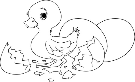 ducklings: Easter duckling jumping out from broken egg. Coloring page Illustration