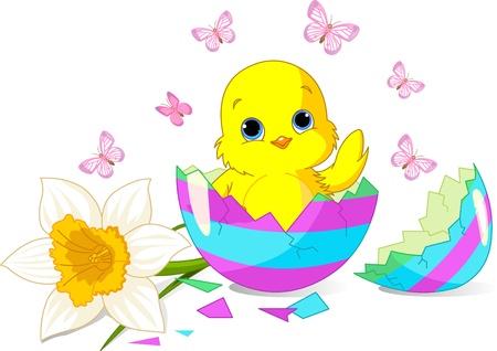 chick: Sentado en el huevo de Pascua roto el pollito de Pascua.