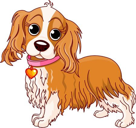 cavalier: Illustration of Cavalier King Charles Spaniel
