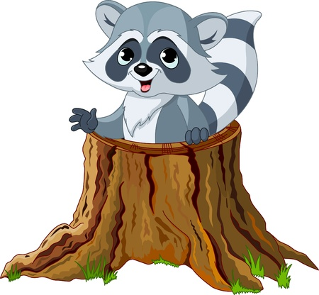 tree stump: Raccoon looking out from a fallen tree stump Illustration