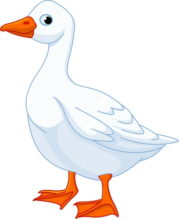 ocas: Ilustración de ganso doméstico blanco aislada sobre fondo blanco