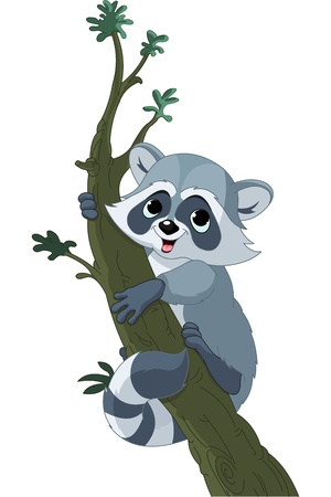 fur trees:  Illustration of cute funny cartoon raccoon climbing on the tree