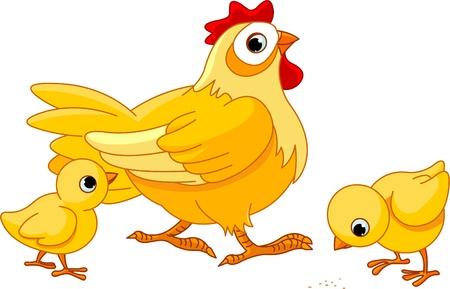 granja avicola:  Madre gallina con sus pollitos bebé