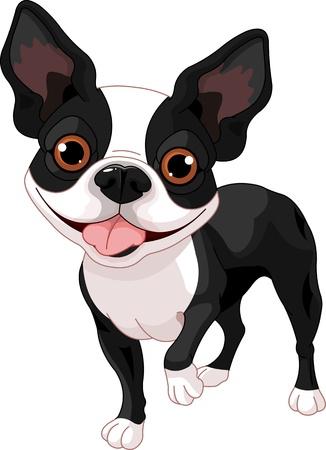 schattige dieren cartoon: Boston Terrier, staande in voorzijde van de witte achtergrond