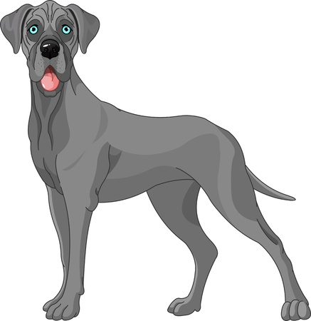 cartoon dog: Great Dane dog, standing in front of white background