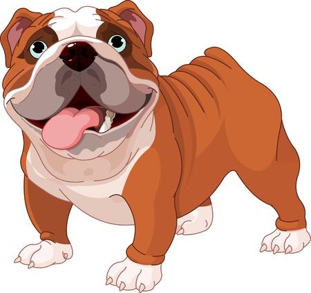 perro caricatura: Bulldog Ingl�s, de pie delante de fondo blanco Vectores