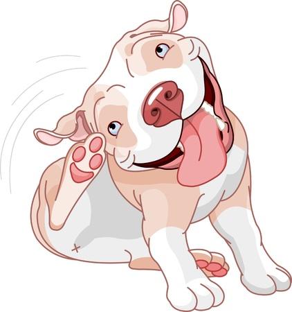 flea: Ilustraci�n de un pit bull lindo rayado sobre fondo blanco Vectores