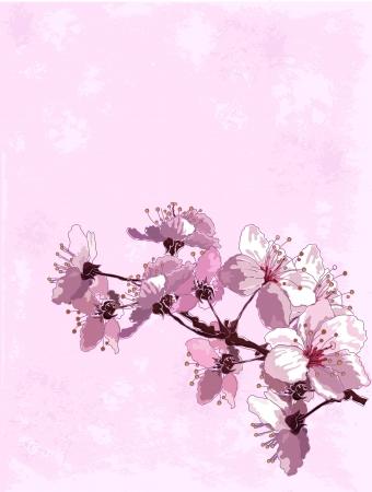 Frühlingshintergrund mit Kirschblüte Standard-Bild - 12485459