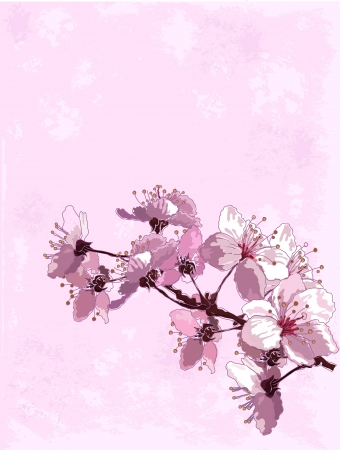 Spring  background with cherry blossom Vector