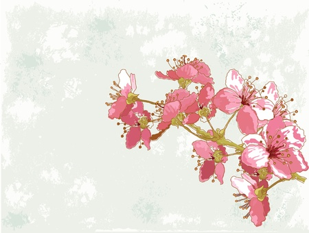 art painting: Spring  background with cherry blossom