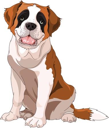perro caricatura: Perro San Bernardo, sentado delante de fondo blanco Vectores