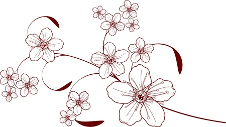Beautiful floral Cherry blossom design Vector