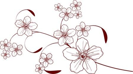 apple blossom: Beautiful floral Cherry blossom design Illustration