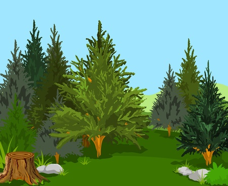 deciduous tree: Un paisaje verde bosque con �rboles de pino