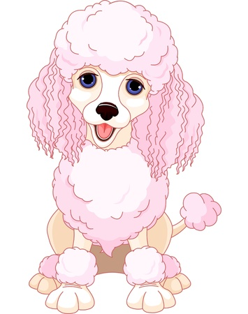 cartoon dog: Illustration of chic pink poodle