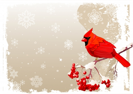 birds in tree: Red Cardinal uccello seduto sul ramo mountain ash