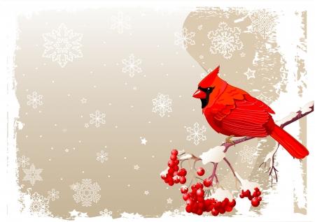 boom met vogels: Rode Kardinaal vogel zit op lijsterbes tak
