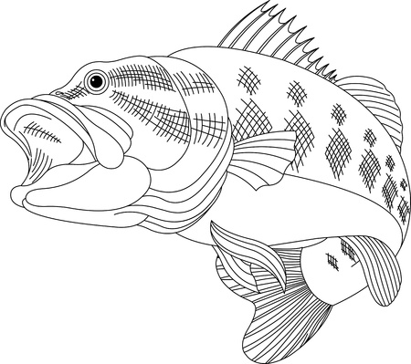 large mouth: Black line illustration for a leaping Bass