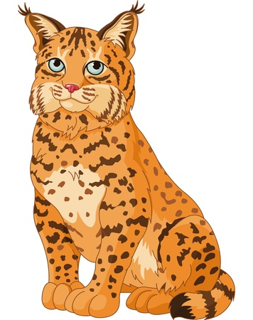 lynx: Illustration of wild cat