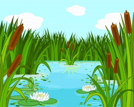 rietkraag: Illustratie van een vijver scène