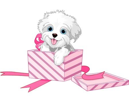 lap dog: Cute cucciolo all'interno di scatole regalo