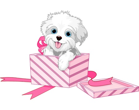 lap dog: Cute puppy inside gift boxes