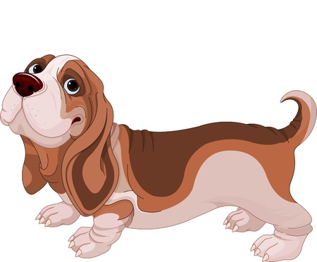 hound: Illustration of Basset Hound breed dog