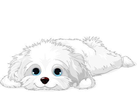 cartoon dog: A cute white Havanese puppy laying down