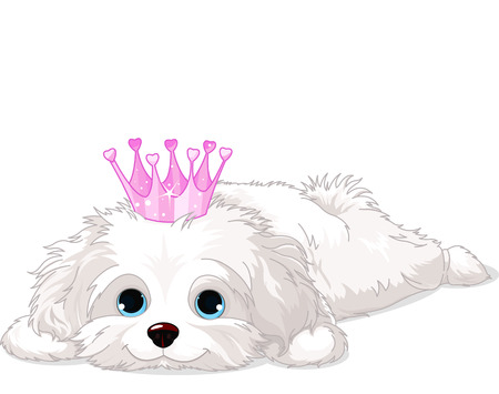 lap dog: A cute white Havanese puppy with crown laying down  Illustration