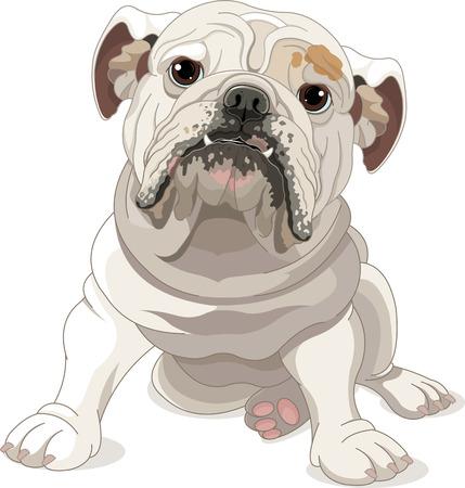 Illustration of English Bulldog isolated on white