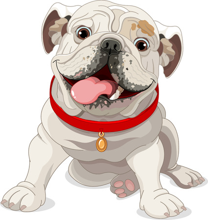 english: Illustration of English bulldog with red collar