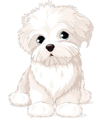 クリップアート マルタ子犬犬  イラスト・ベクター素材