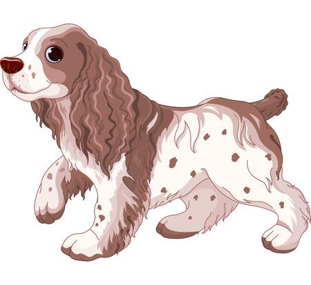 cocker: Cavalier King Charles Spaniel Hund Illustration