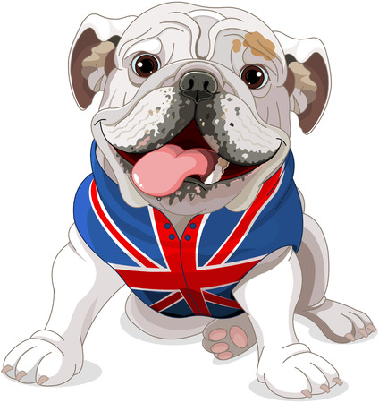 english: English Bulldog wearing a coat with the symbol of the English flag Illustration