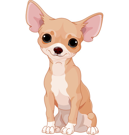 cartoon chihuahua:  Cute  dog of breed Chihuahua