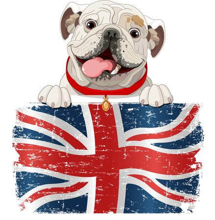 english text: English Bulldog over British flag  Illustration