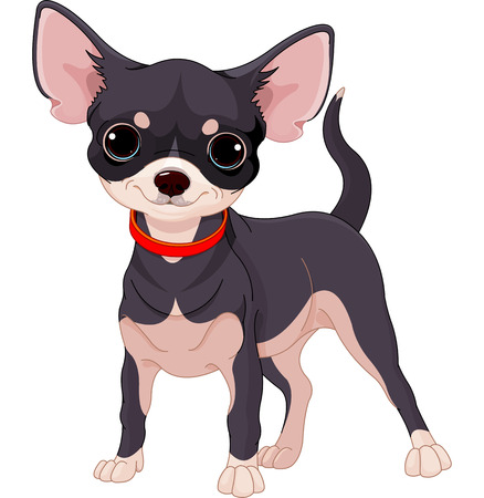 Cute dog of breed Chihuahua Illustration