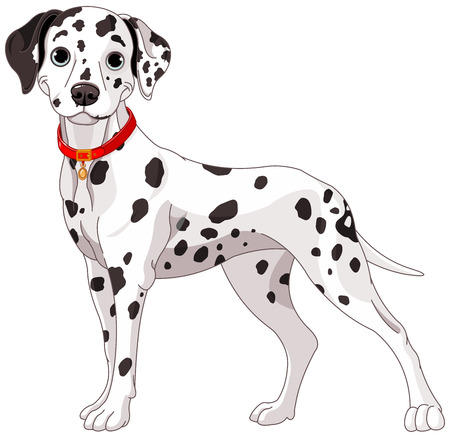 Illustration of a cute Dalmatian dog all attention Vettoriali