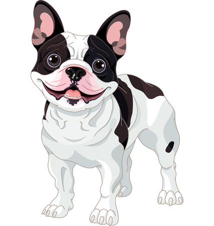 Illustration of cartoon French bulldog