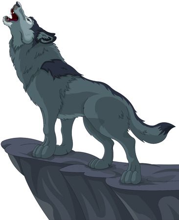 gray wolf: Illustration of howling wolf that stands on cliff