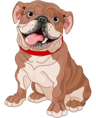 Illustration of cute English bulldog  Vector