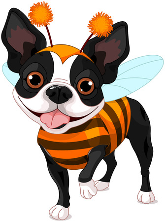 Boston terrier dressed-up like bee for Halloween